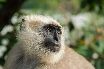 Photograph - Black Faced Monkey by Nila Newsom