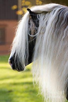 Long Mane Photograph - Black Forest Horse by Gabriele Boiselle