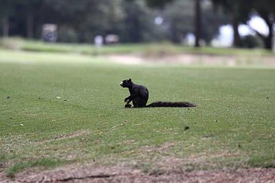 Black Fox Squirrel Original by Jean Macaluso
