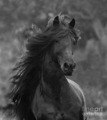 Horse Mane Photograph - Black Friesian Comes Close by Carol Walker
