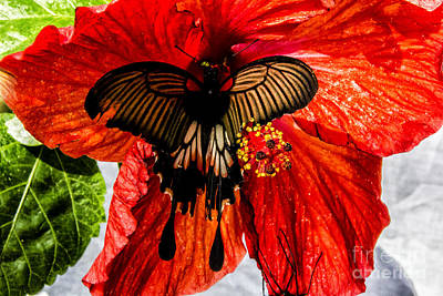 Digital Art - Black Birdwing On Red by Georgianne Giese