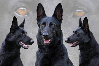 German Shepherd Dogs Photograph - Black German Shepherd Dog Collage by Sandy Keeton