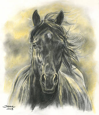 Wild Horses Drawing - Black Gold by Jana Goode