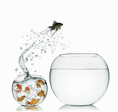 Freedom Photograph - Black Goldfish by Gandee Vasan