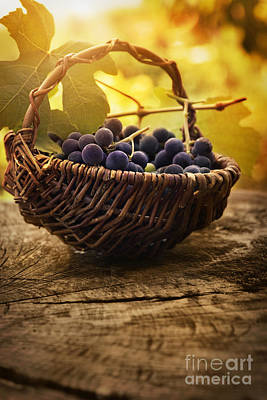 Black Grapes Art Print by Mythja  Photography