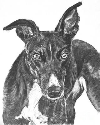 Rescued Greyhound Drawing - Black Greyhound Sketch by Kate Sumners
