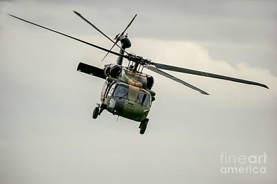 Photograph - Black Hawk Swoops by Ray Warren