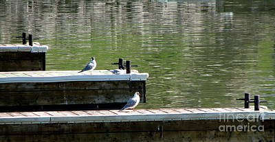 Photograph - Black-headed Seagulls On Pier At Sturgeon Point Marina by Rose Santuci-Sofranko