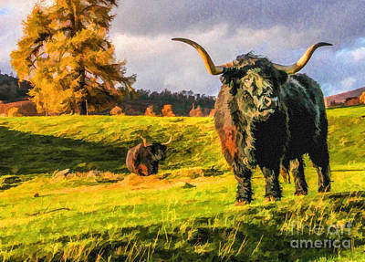 Cattle Digital Art - Black Highland Bulls by Liz Leyden