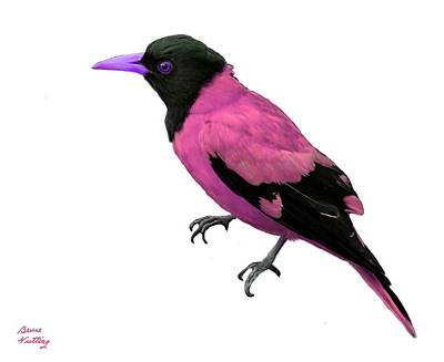 Pittsburgh According To Ron Magnes - Black Hooded Pink Oriole by Bruce Nutting