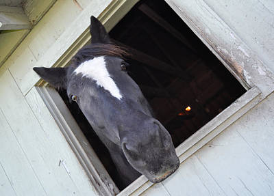 Photograph - Black Horse 1 by Staci Bigelow
