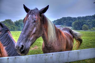 Photograph - Black Horse At A Fence by Jonny D