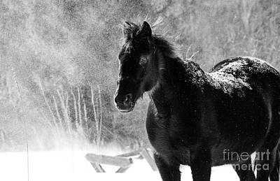 Photograph - Black Horse by Cheryl Baxter