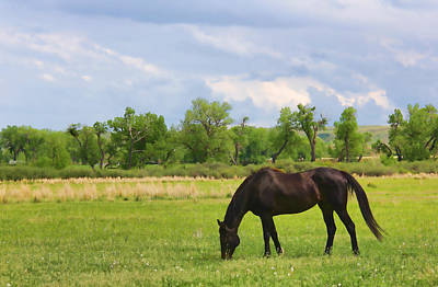 Photograph - Black Horse In Montana Pasture by Jennie Marie Schell