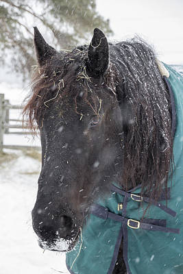 Black Horse In Snow Art Print