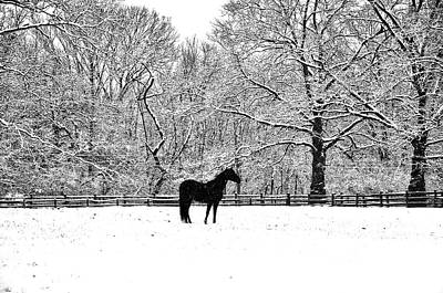 Black Horse In The Snow Art Print by Bill Cannon