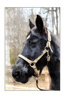 Black Horse Art Print