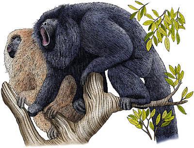 Photograph - Black Howler Monkeys by Roger Hall