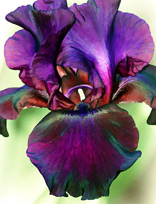 Floral Photograph - Black Iris by Marcia Colelli