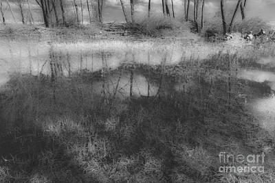 Photograph - Black Is Beautiful-2 by Casper Cammeraat