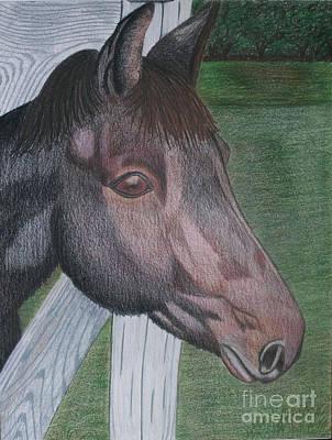 Drawing - Black Jack by Cecilia Stevens