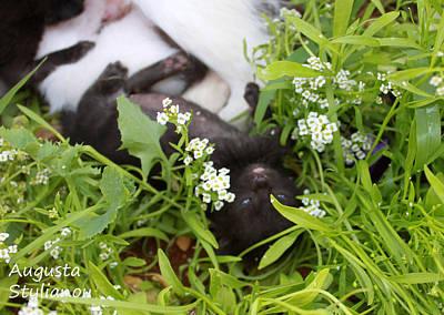 Photograph - Black Kitten by Augusta Stylianou