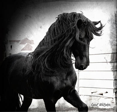 Photograph - Black Knight Stallion by Carol Whitaker