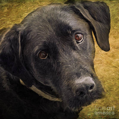 Labrador Retriever Digital Art - Black Lab Love by Jayne Carney