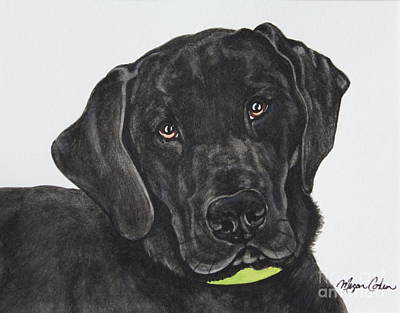 Pet Portraits Painting - Black Lab by Megan Cohen
