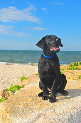 Dog At Beach Photograph - Black Lab Puppy by Catherine Reusch Daley