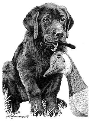 Drawing - Black Lab Puppy by Rob Christensen