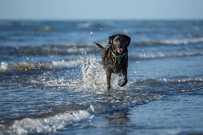 Buy Dog Art Photograph - Black Labrador In The Sea by Izzy Standbridge