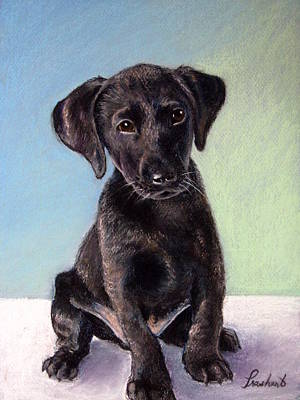 Painting - Black Labrador Puppy by Prashant Shah