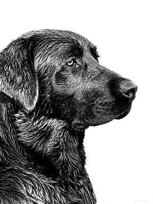 Mammals Photos - Black Labrador Retriever Dog Monochrome by Jennie Marie Schell