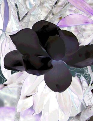 Photograph - Black Magnolia by Debi Singer