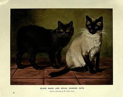 Tortoiseshell Painting - Black Manx And Royal Siamese Cats by W Luker Jr