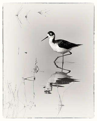 Animals Royalty-Free and Rights-Managed Images - Black-necked Stilt at Carson Lake Wetlands by Priscilla Burgers