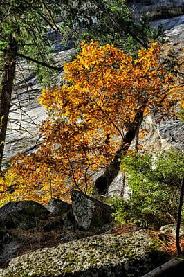 Photograph - Black Oak by Cat Connor