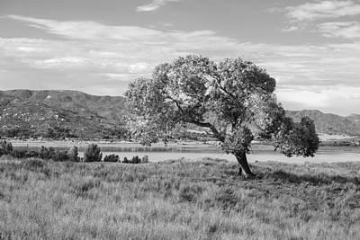 Landscape Photograph - Black Oak by Peter Tellone
