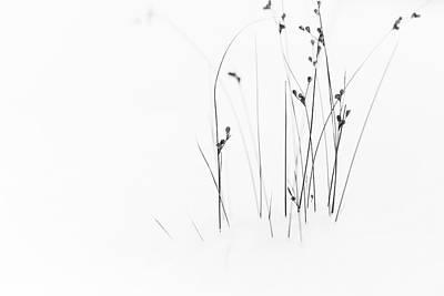 Plant Photograph - Black On White by Du?an Ljubi?i?