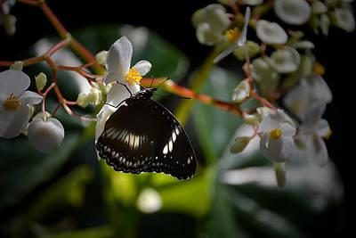 Photograph - Black On White by Judy Wanamaker