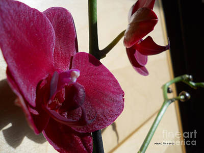 Art Print featuring the photograph Black Orchid by Ramona Matei