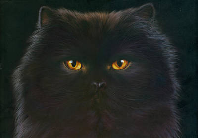 Elegant Cat Photograph - Black Persian by Andrew Farley