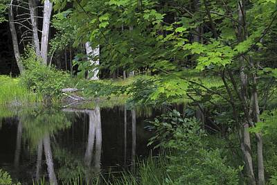 Art Print featuring the photograph Black Pond And Maple by Colleen Williams