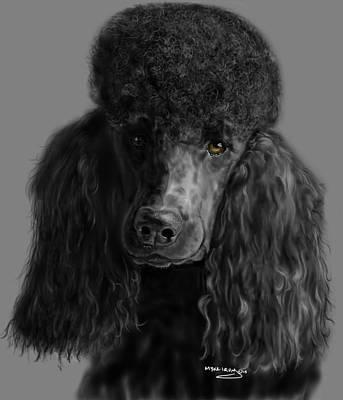 Akc Drawing - Black Poodle by Myke  Irving