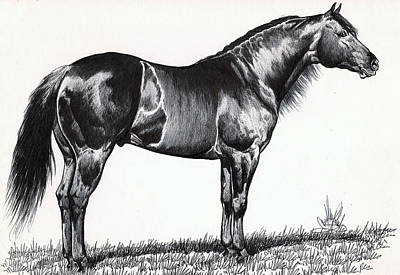 Drawing Of A Horse Drawing - Black Quarter Horse by Cheryl Poland