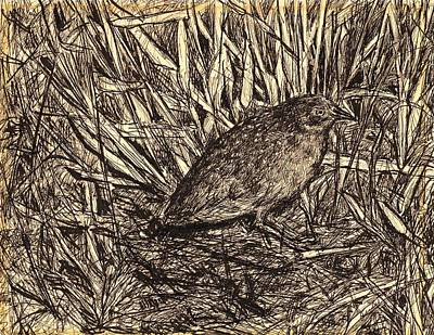 Drawing - Black Rail by Kendall Kessler