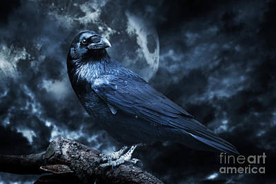 Horror Photograph - Black Raven In Moonlight Perched On Tree by Michal Bednarek