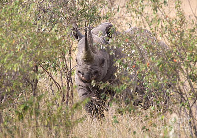 Rhinocerus Photograph - Black Rhino  by Chris Scroggins