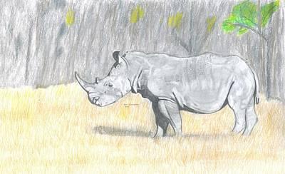Rhinocerus Drawing - Black Rhino by Don  Gallacher